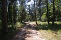 Le chemin en descendant de la Borie Haute vers la D17