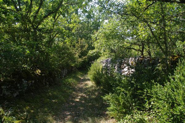 Le sentier menant au Mas de Cornio