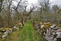 Le chemin vers Aubrac