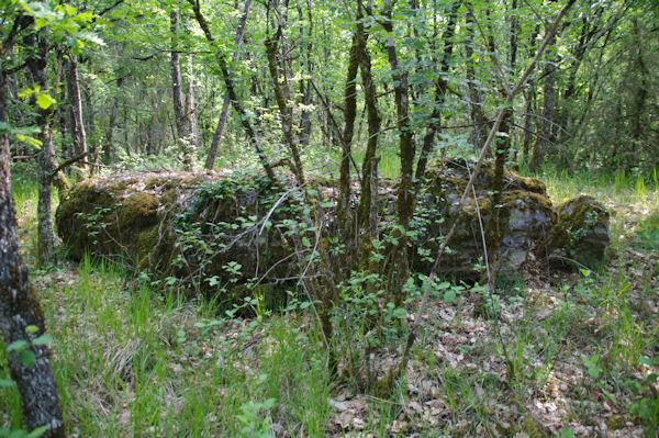 La table d_un dolmen au Causse de Cousis?