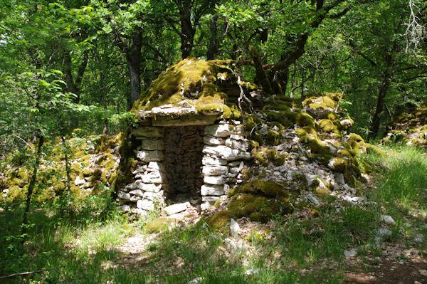 Un gariotte effondrée dans la forêt au Pech de Récobert