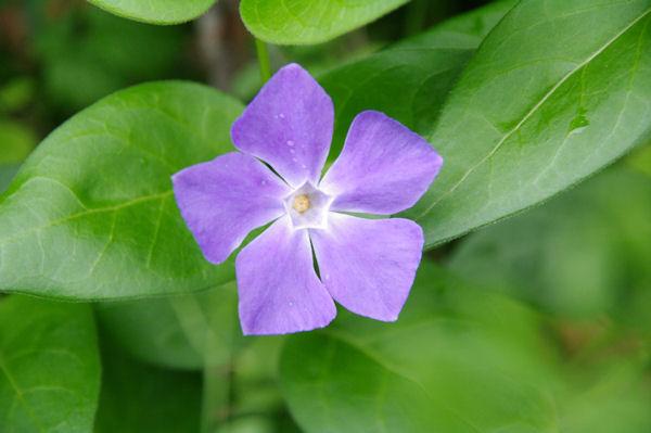 Jolie fleur dans la descente vers Niaudon