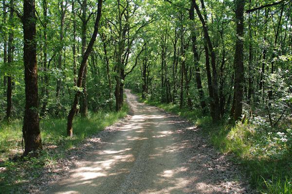 Le chemin dans la forêt au dessus de Las Plantades