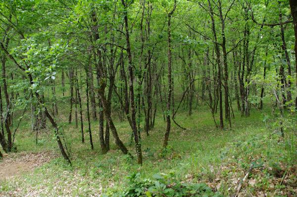 Les bois au Pech Galy