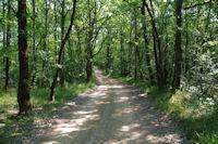 Le chemin dans la foret au dessus de Las Plantades