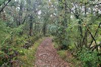 Le chemin au dessus de Riols