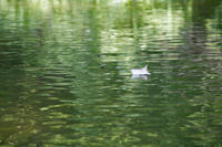 Au fil de l'eau verte du Cele