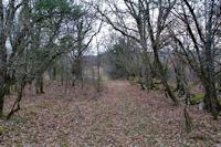 Hors sentier dans le Bois de Ferrieres