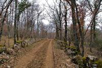 Le chemin dans le Bois de Ferrières