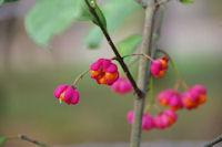 Jolies couleurs d_automne