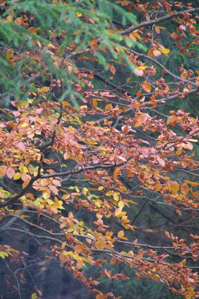 C_est l_automne vers La Jasse