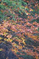 C'est l'automne vers La Jasse