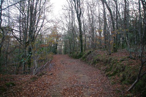 Dans la forêt de la Vialette