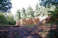 Jolies piles de bois au Caussarel