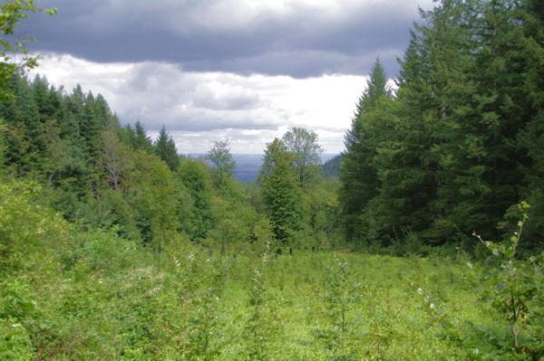 Une petite troué dans le Bois de St Amancet pour voir la vallée de Castres