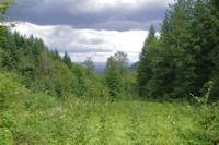 Une petite troue dans le Bois de St Amancet pour voir la vallee de Castres