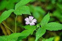 Jolie fleur dans la vallee de la Durencuse