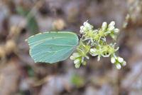 Feuille ou papillon