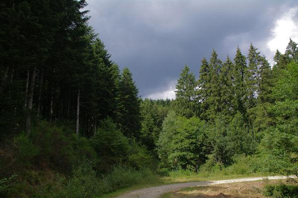 Le chemin dans la forêt de Crabemorte