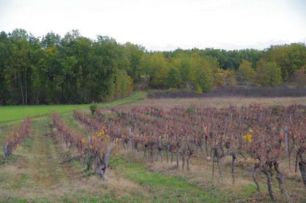 Les vignes vers as Clots