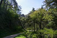 La vallee arboree du Taurou
