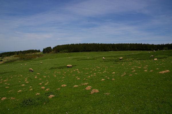 Les verts paturages au dessus de la Ferme Albouy