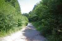 Le chemin sous le Rec de l'Auzel
