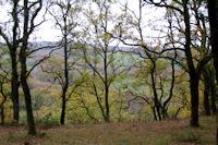 Paysage d'automne vers Bayol