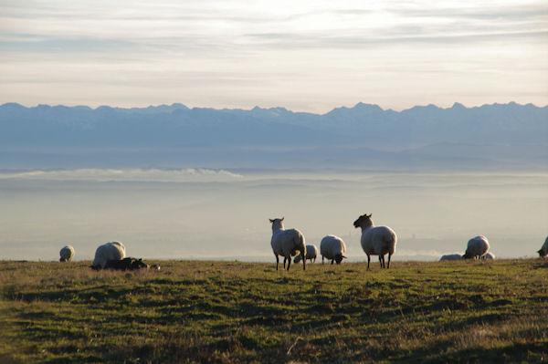 Des moutons au dessus d_En Roujou