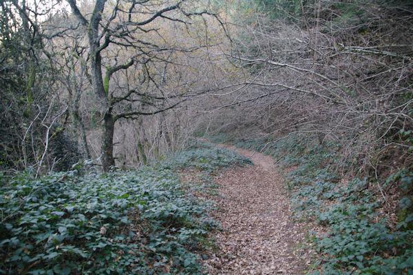 Le chemin descendant vers le vallon de ruisseau du Poutou