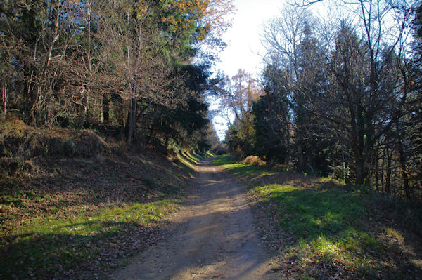 Le chemin au dessus de l_Hermitage