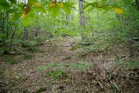 Errance dans le vallon du ruisseau de Pradelis