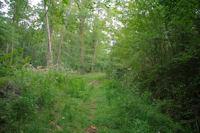 Le chemin longeant le ruisseau du Gourpat