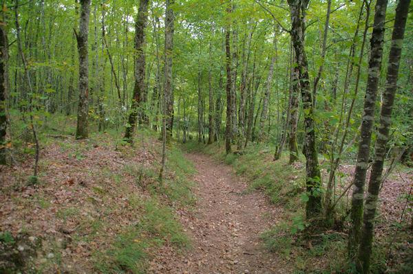 Le sentier pour rejoindre la vallée du Tescou