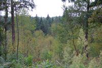 Le Bois du Fustie