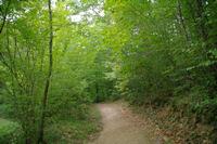 En descendant dans le vallon boise du ruisseau de la Bayssiere