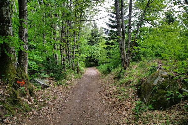 Le sentier vers La Fusarié