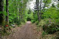 Le sentier vers La Fusarie
