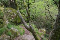 Le sentier escarpe au dessus du Gouffre de Malamort