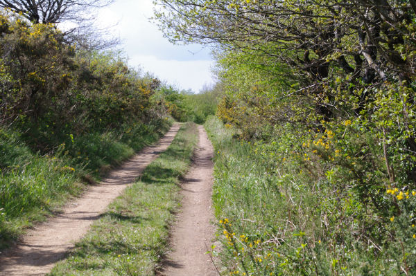 Le chemin vers Jacournassy