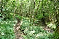 Le vallon boise du Mouscaillou, en haut des cascades