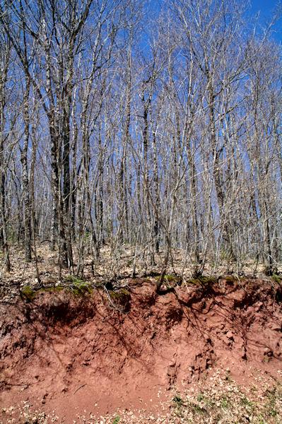 Contraste de couleurs sur la route forestière de la Plégade