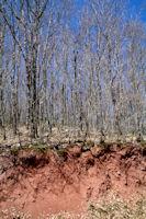 Contraste de couleurs sur la route forestiere de la Plegade