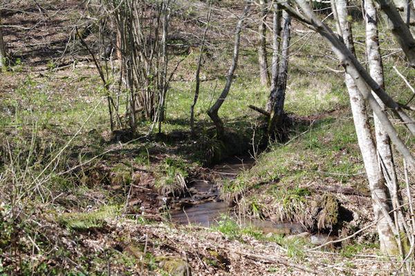 Ruisseau dans la forêt de Grésigne