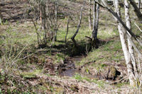 Ruisseau dans la foret de Gresigne