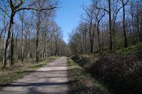 La route forestiere de la Martinio