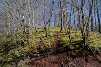 En forêt de Grésigne depuis Puycelci