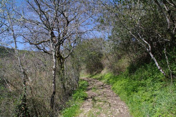Le GR46 descendant dans le vallon de l_Audoulou