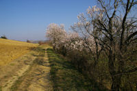 Le joli chemin sous Petarri