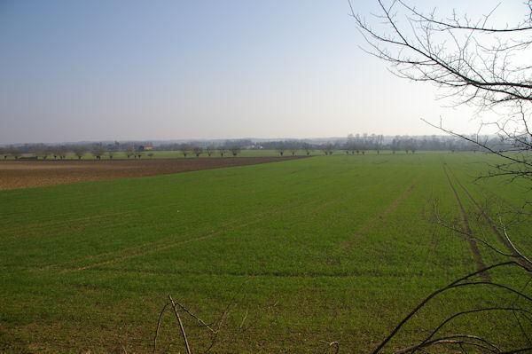 Les champs de blé à La Grande Arse